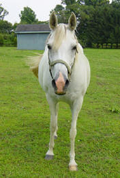 horse_boarding_nj_dorsett_horse_farms-2_small